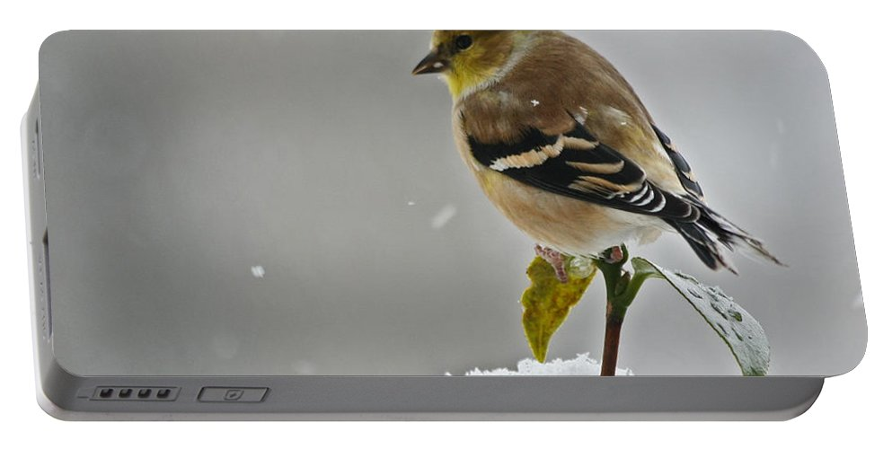 Goldfinch Portable Battery Charger featuring the photograph Goldfinch by Denise Romano