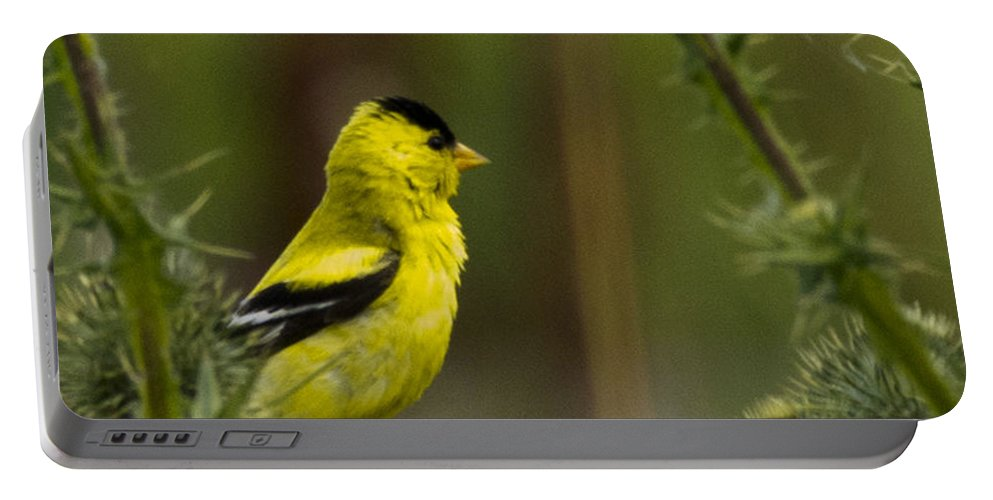 Yellow Finch Portable Battery Charger featuring the photograph Yellow Finch by Rob Mclean
