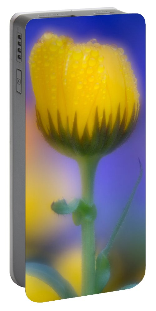 Yellow Flower Portable Battery Charger featuring the photograph Yellow Flower With Dew Drops by Greg Nyquist