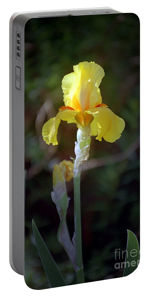 Iris Portable Battery Charger featuring the photograph Yellow Iris by Kathy McClure
