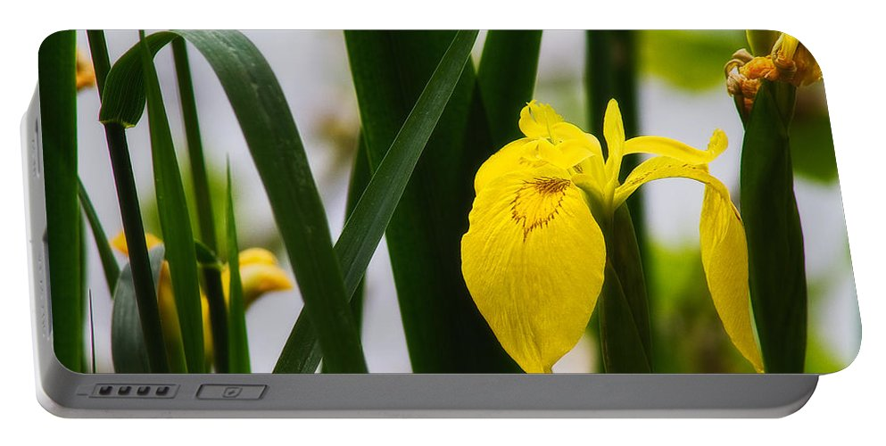Europe Portable Battery Charger featuring the photograph Yellow Iris by Roberto Pagani