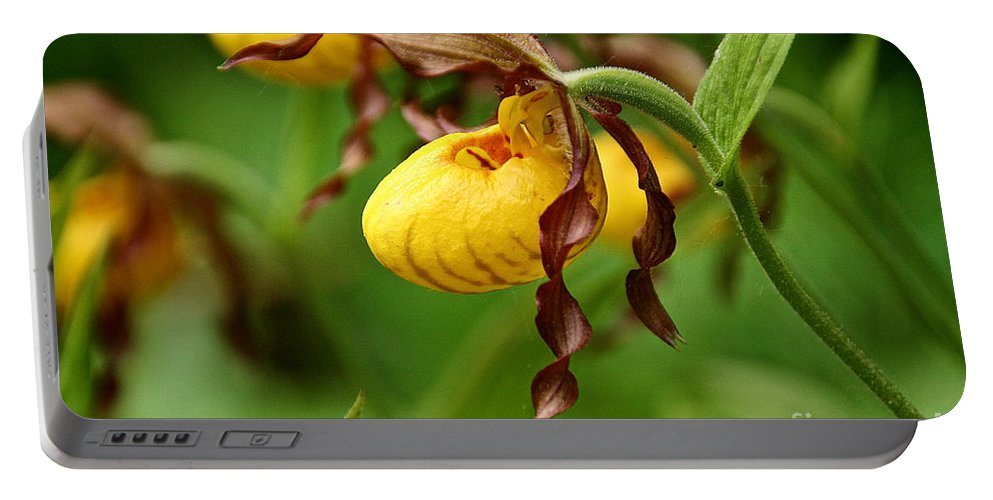 Flower Portable Battery Charger featuring the photograph Yellow Lady Slipper by Susan Herber
