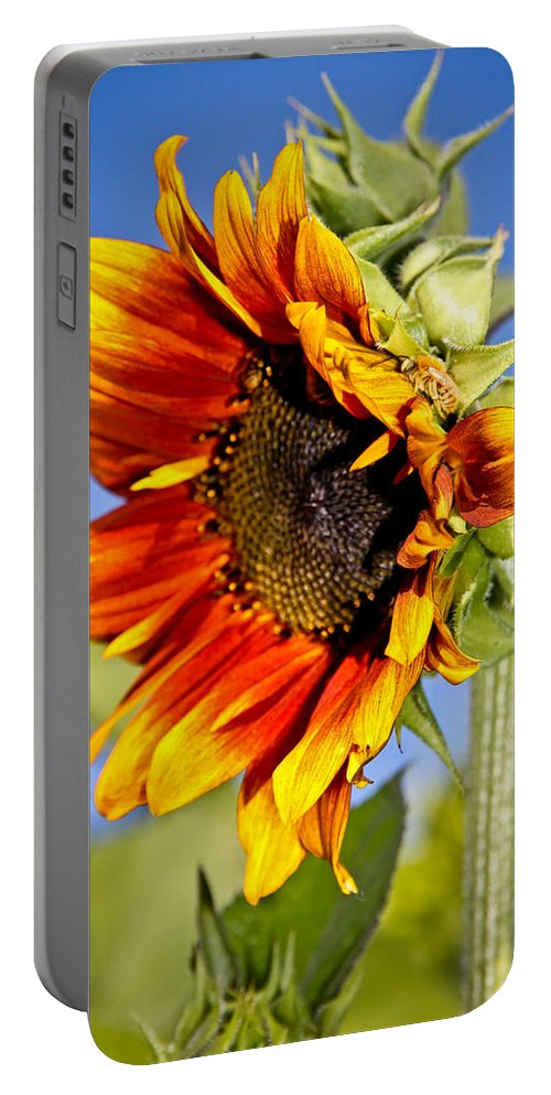 Sunflower Portable Battery Charger featuring the photograph Yellow Orange Sunflower by Athena Mckinzie