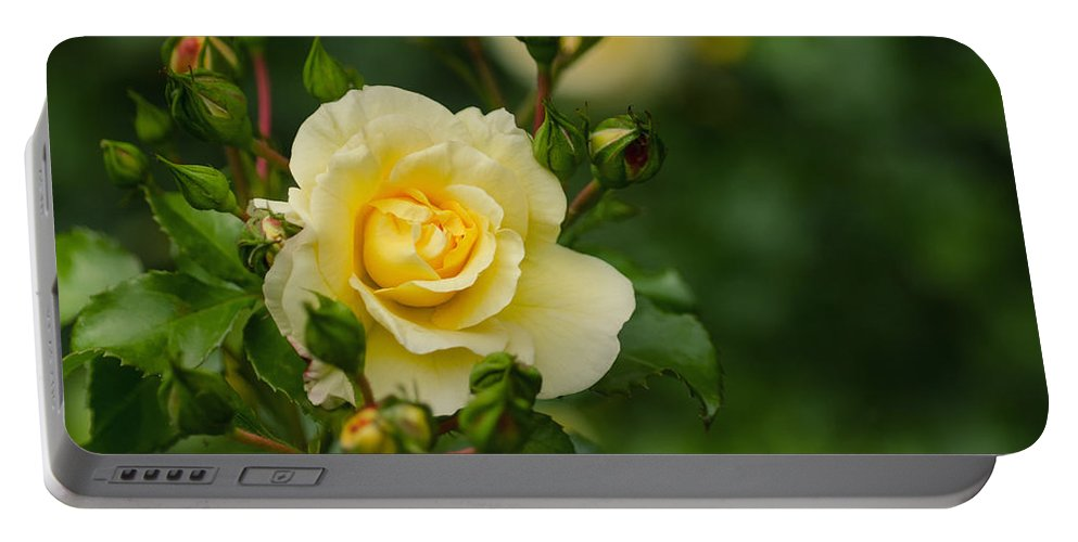 Rose Portable Battery Charger featuring the photograph Yellow Roses by TouTouke A Y