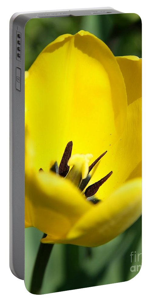 Tulip Portable Battery Charger featuring the photograph Yellow Tulip Cup by Christiane Schulze Art And Photography