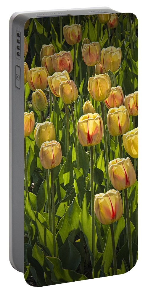 Art Portable Battery Charger featuring the photograph Yellow Tulip Flowers On Windmill Island In Holland Michigan by Randall Nyhof
