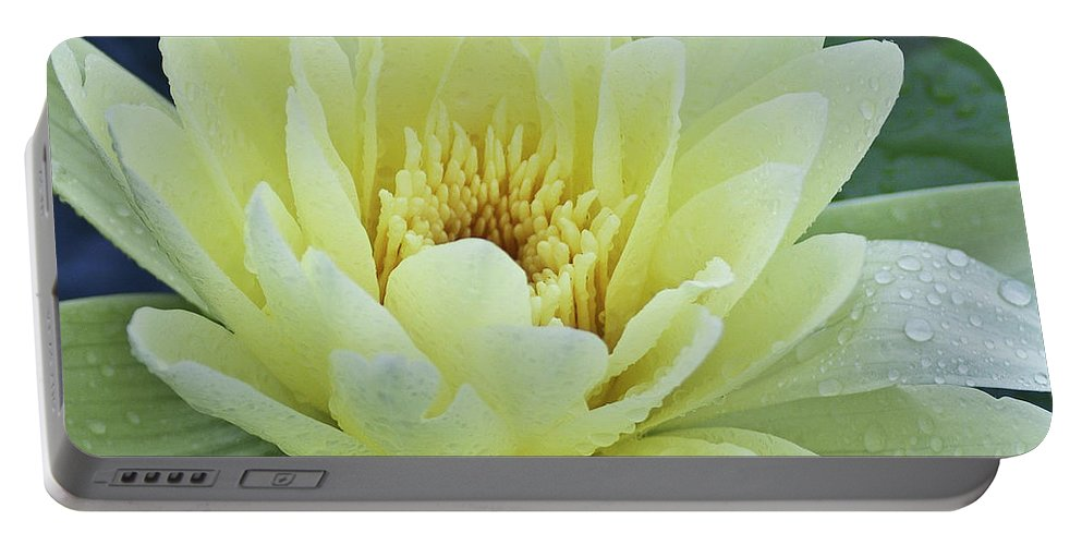 Water Llilies Portable Battery Charger featuring the photograph Yellow Water Lily Nymphaea by Heiko Koehrer-Wagner