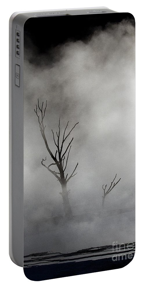 Tree Portable Battery Charger featuring the photograph Yellowstone Tree  #3449 by J L Woody Wooden