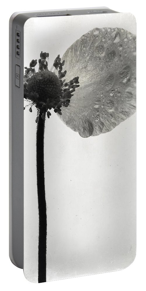 Flowers Portable Battery Charger featuring the photograph Yesterdays Gone by The Artist Project