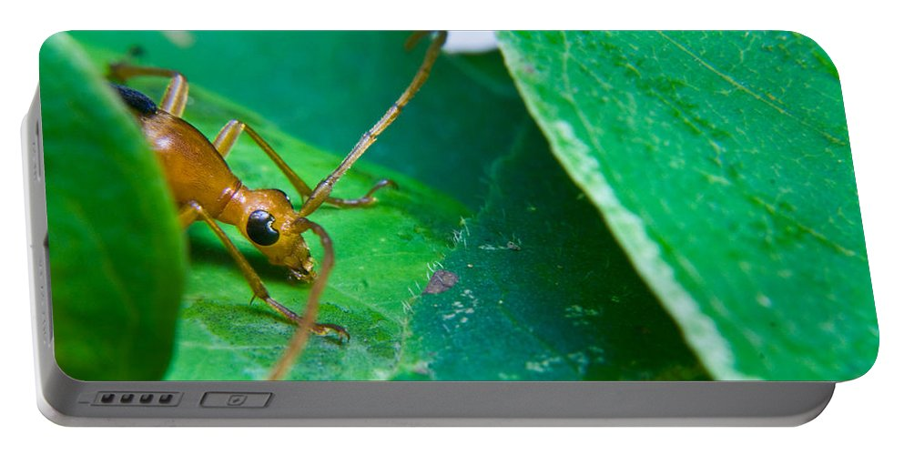 Beetle Portable Battery Charger featuring the photograph You Called by Douglas Barnett