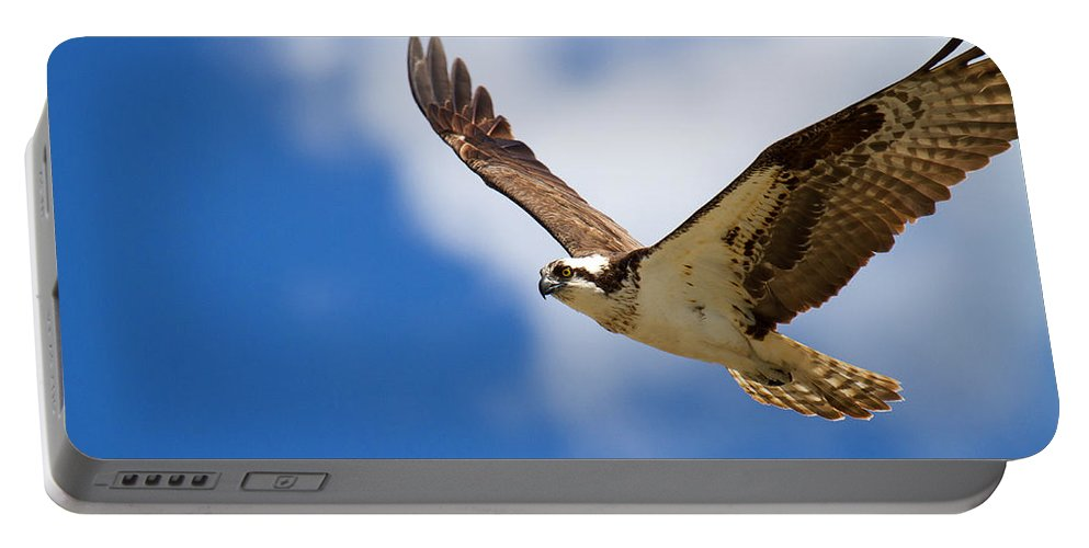 Osprey Photograph Portable Battery Charger featuring the photograph You Lift Me Up by Jim Garrison