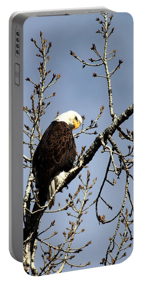 Bald Eagle Portable Battery Charger featuring the photograph You Looking At Me? by Shane Bechler