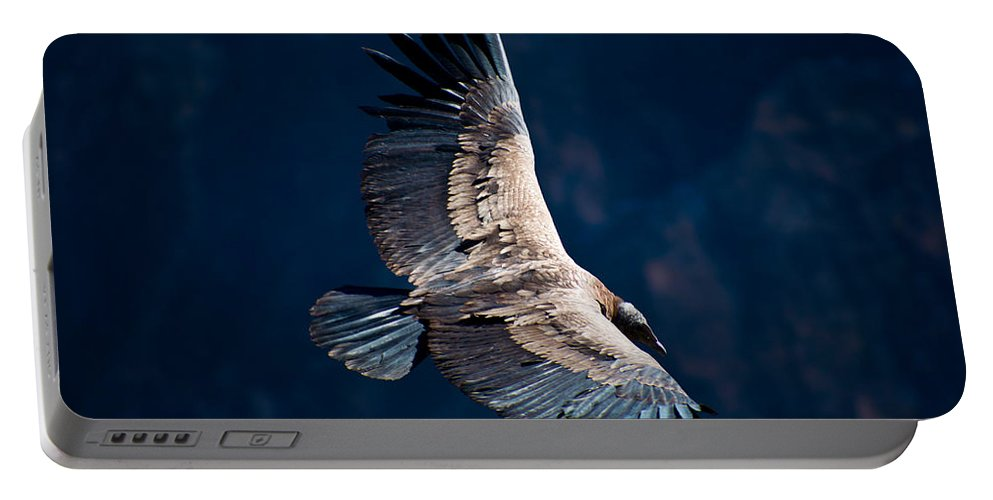 Peru Portable Battery Charger featuring the photograph Young Andean Condor by Kent Nancollas