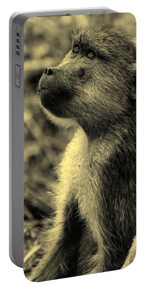 Baboon Portable Battery Charger featuring the photograph Young Baboon In Black And White by Amanda Stadther