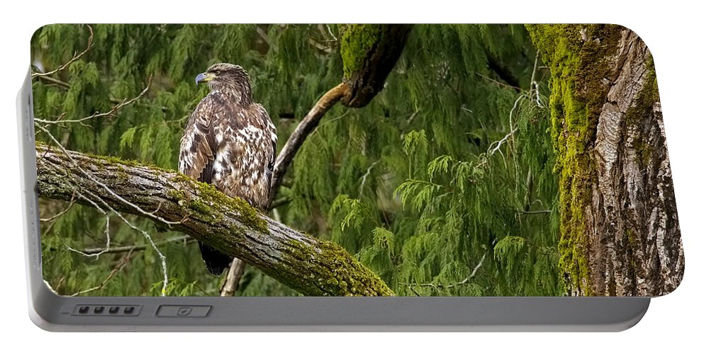 Bald Eagle Portable Battery Charger featuring the photograph Young Baldy 2 by Sharon Talson