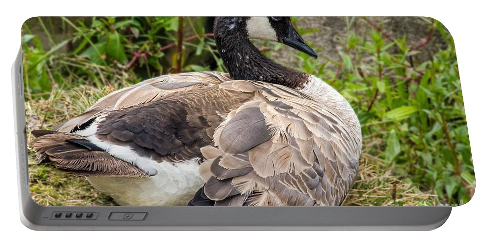Bird Portable Battery Charger featuring the photograph Young Canada Goose by Kate Brown