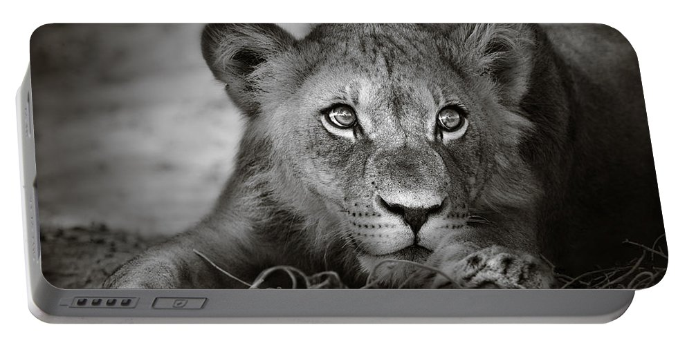 Wild Portable Battery Charger featuring the photograph Young lion portrait by Johan Swanepoel
