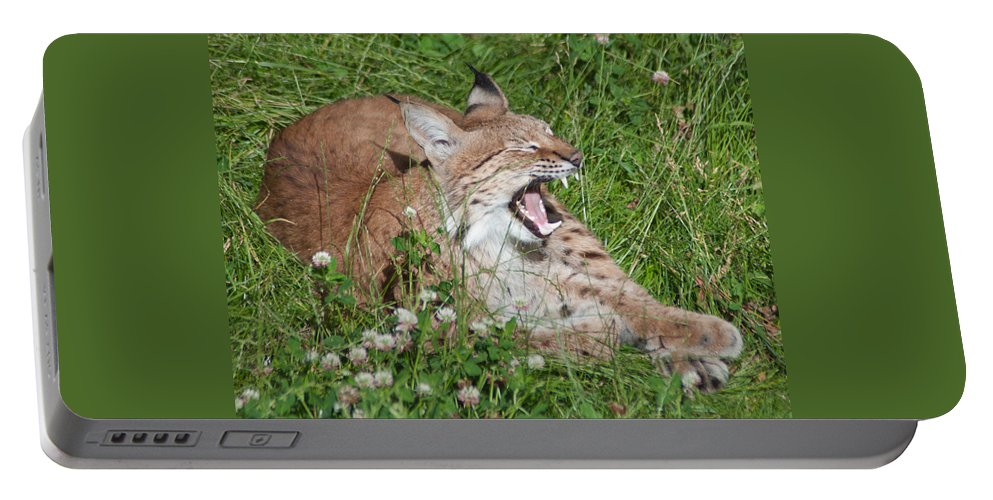 Alone Portable Battery Charger featuring the photograph Young Lynx Yawning by Jill Mitchell