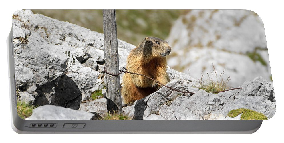 Alpine Portable Battery Charger featuring the photograph Young Marmot by Antonio Scarpi