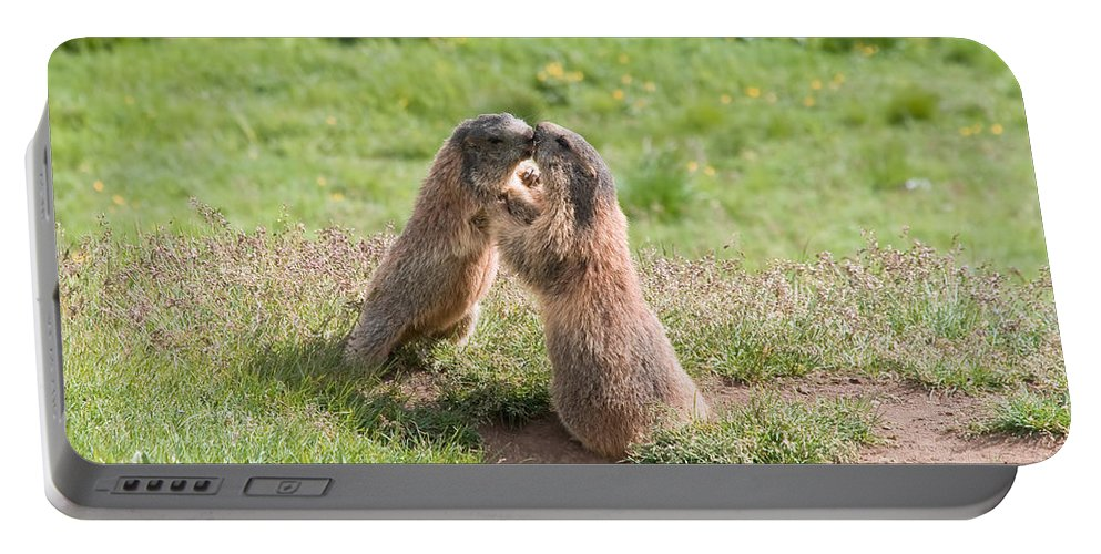 Marmot Portable Battery Charger featuring the photograph Young Marmots by Antonio Scarpi