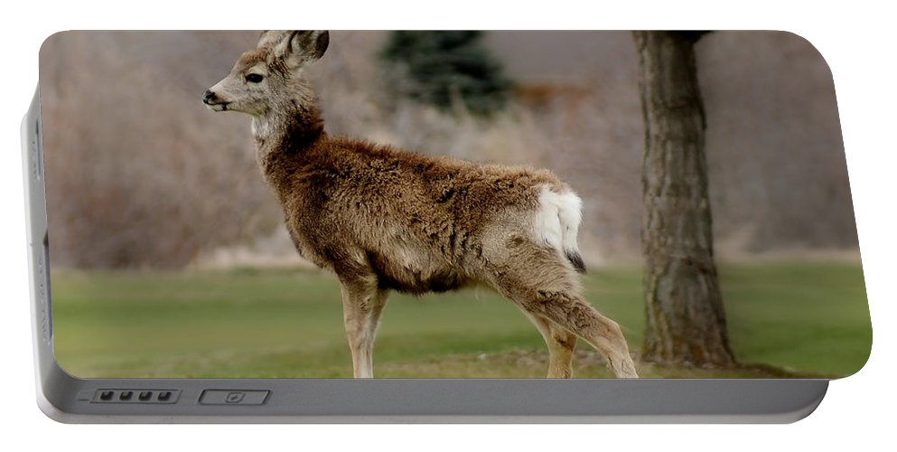 Big Ears Portable Battery Charger featuring the photograph Young Mule Deer by Ernie Echols