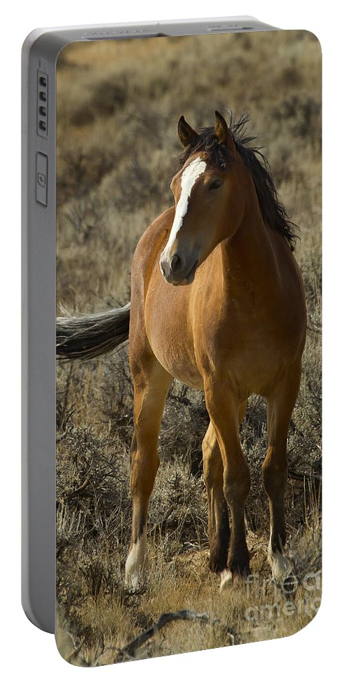 Horse Portable Battery Charger featuring the photograph Young Wild Mare  #0307 by J L Woody Wooden