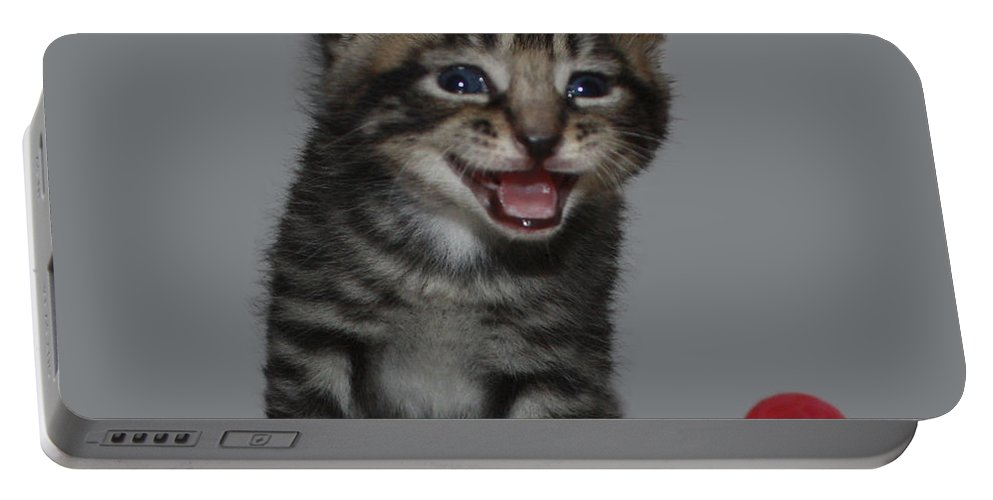 Funny Kitten Portable Battery Charger featuring the photograph You're Funny by Terri Waters