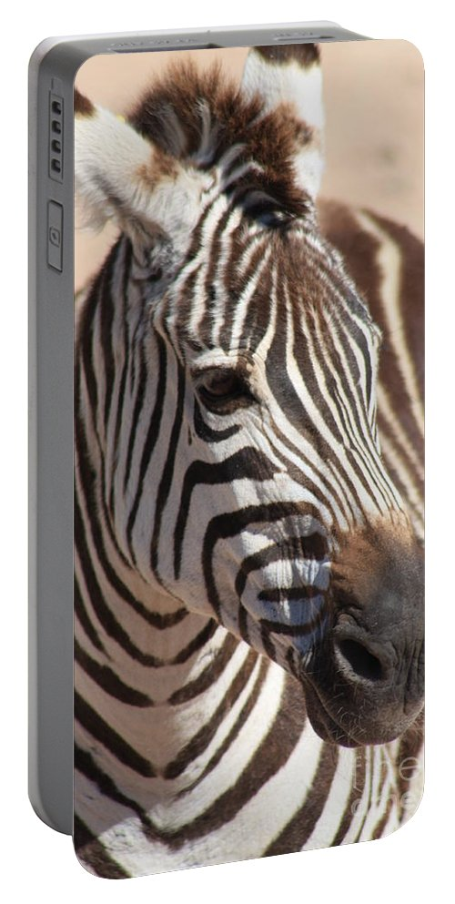 Zebra Portable Battery Charger featuring the photograph Zebra by Brandi Maher