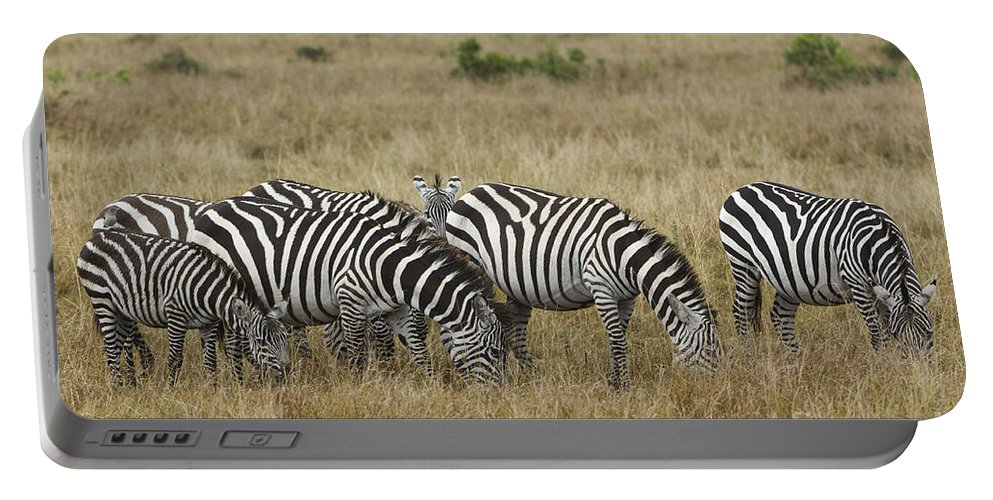 Africa Portable Battery Charger featuring the photograph Zebra On Masai Mara Plains by John Shaw