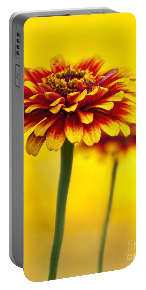Zinnia Portable Battery Charger featuring the photograph Zinnia by Claudia Kuhn