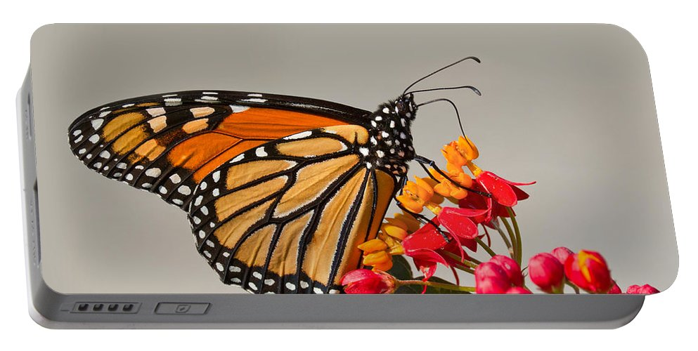 Monarch Portable Battery Charger featuring the photograph Monarch Butterfly by Mircea Costina Photography