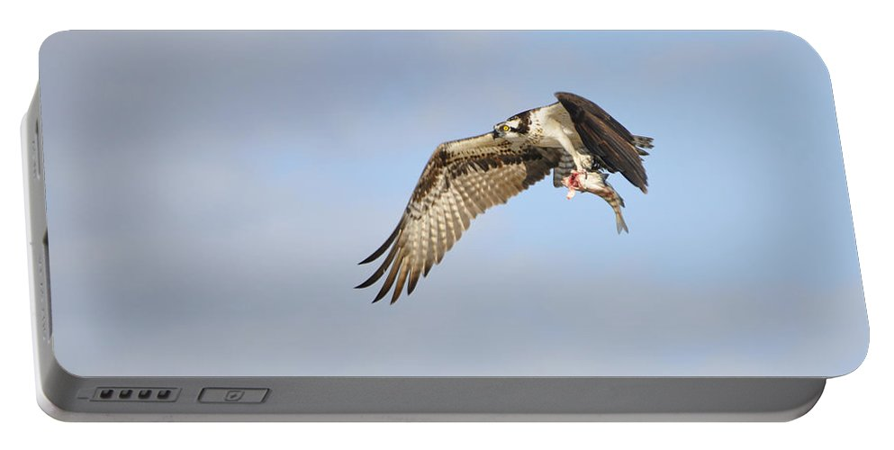 Osprey Portable Battery Charger featuring the photograph Osprey Lunch To Go I by Christine Stonebridge