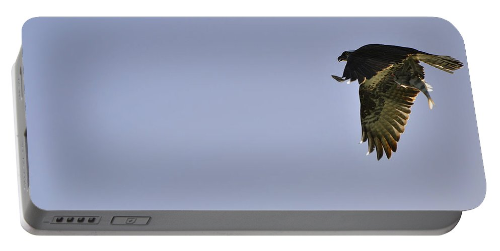 Osprey Portable Battery Charger featuring the photograph Osprey Lunch To Go III by Christine Stonebridge