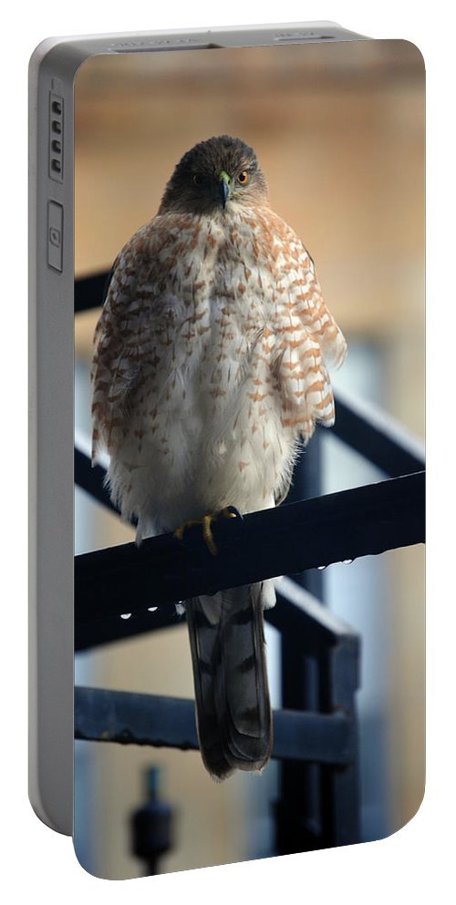 Portable Battery Charger featuring the photograph 03 Falcon by Michael Frank Jr