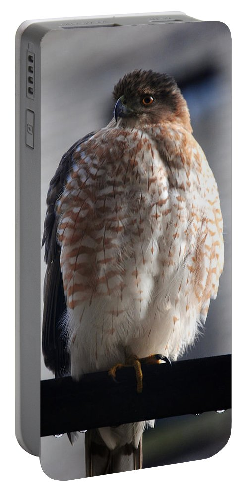 Portable Battery Charger featuring the photograph 06 Falcon by Michael Frank Jr