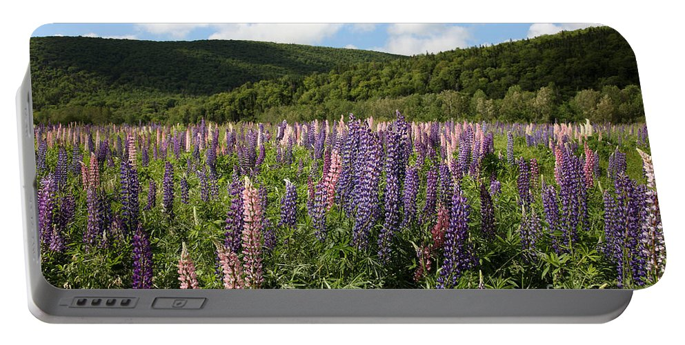 Nature Portable Battery Charger featuring the photograph A Field Of Lupins by Ted Kinsman