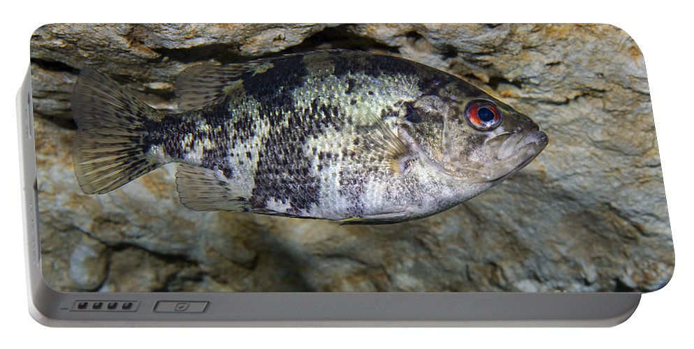 Fish Portable Battery Charger featuring the photograph A Shadow Bass Hovers Motionless by Terry Moore
