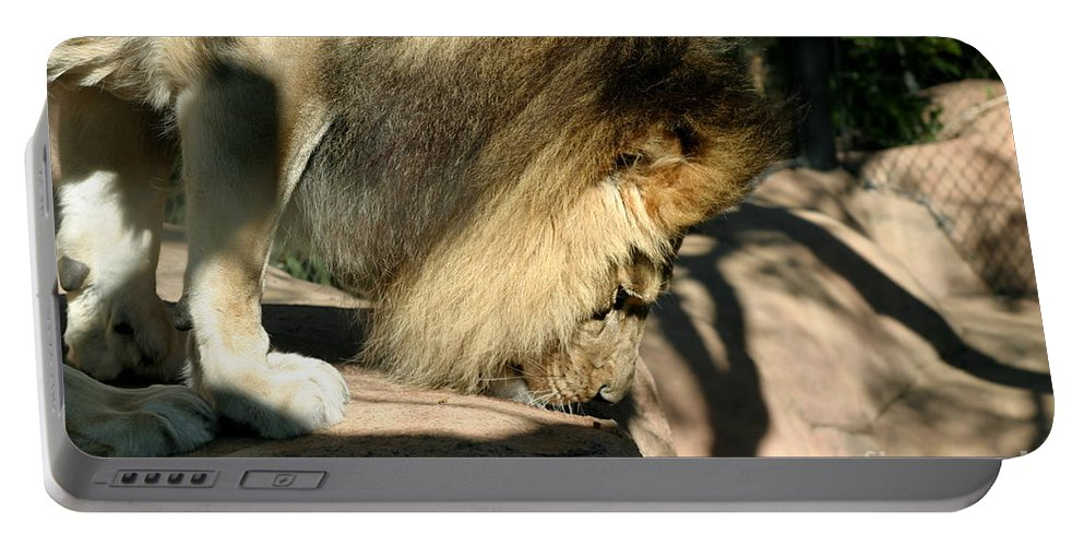 Zoo Portable Battery Charger featuring the photograph African Lion by Henrik Lehnerer
