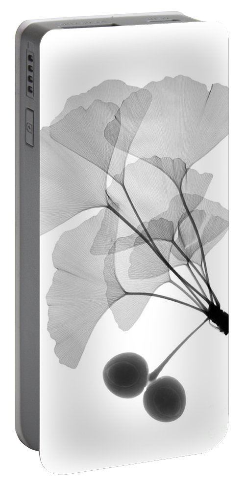 Xray Portable Battery Charger featuring the photograph An X-ray Of Ginko Leaves by Ted Kinsman