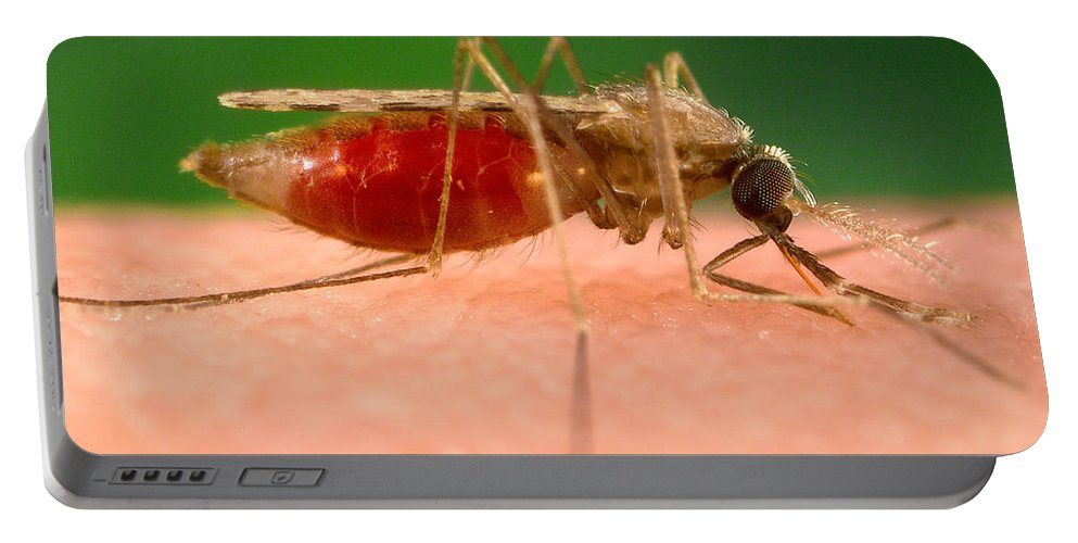 Malaria Portable Battery Charger featuring the photograph Anopheles Minimus, Malaria Vector by Science Source