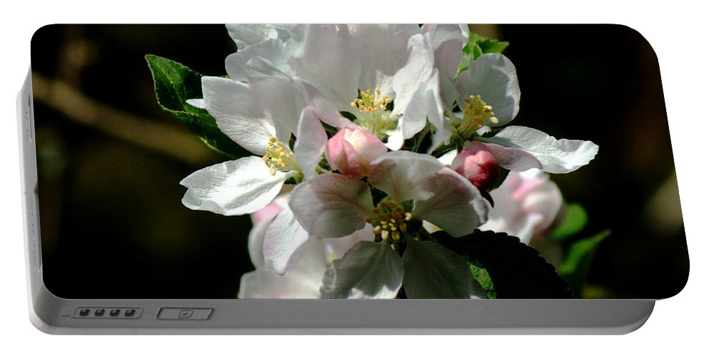 Apple Portable Battery Charger featuring the photograph Apple Blossom by Chris Day