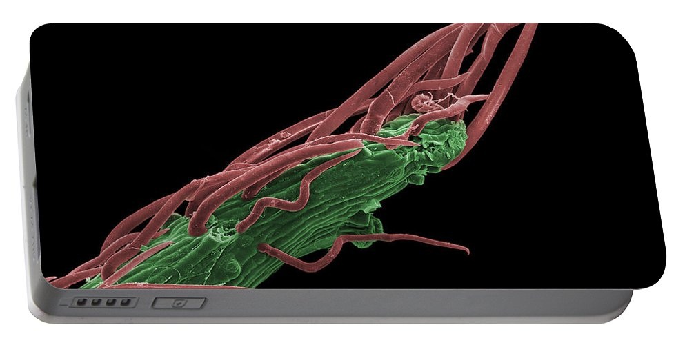 Black Locust Portable Battery Charger featuring the photograph Black Locust Thorn, Sem by Ted Kinsman