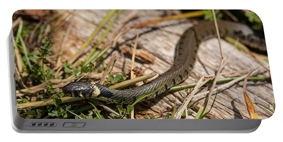 British Grass Snake Portable Battery Charger featuring the photograph British Grass Snake by Dawn OConnor