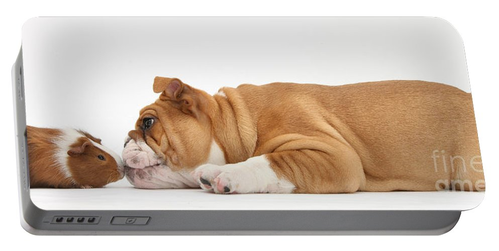 Animal Portable Battery Charger featuring the photograph Bulldog & Guinea Pig by Mark Taylor