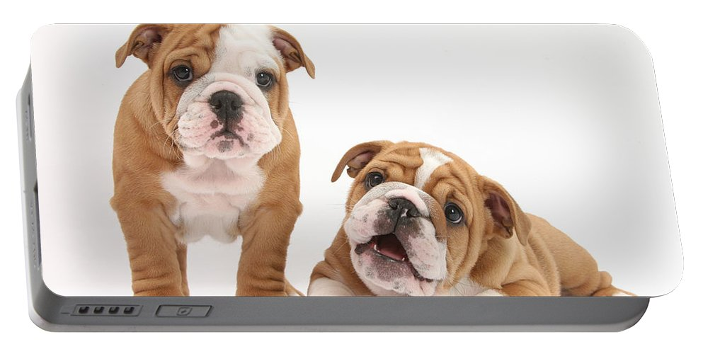 Animal Portable Battery Charger featuring the photograph Bulldog Puppies by Mark Taylor