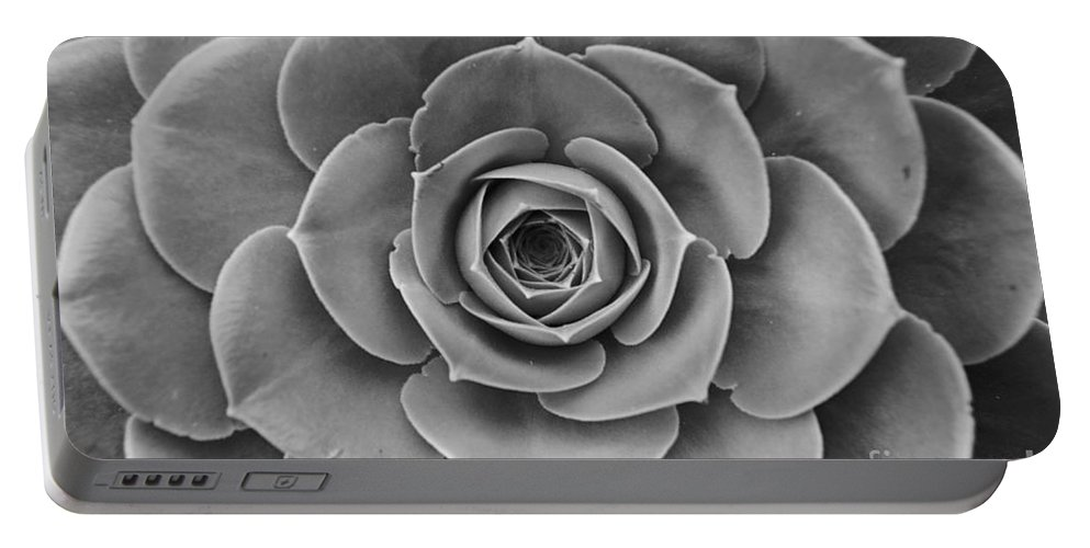 Cactus Portable Battery Charger featuring the photograph Cactus 7 by Cassie Marie Photography