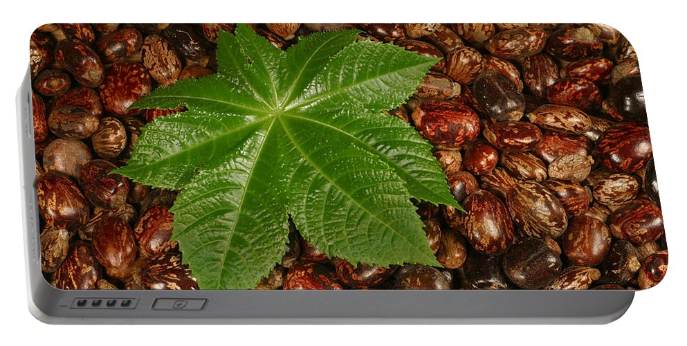 Plant Portable Battery Charger featuring the photograph Castor Bean Leaf And Seeds by Ted Kinsman