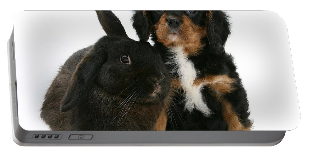 Nature Portable Battery Charger featuring the photograph Cavalier King Charles Spaniel And Rabbit by Mark Taylor