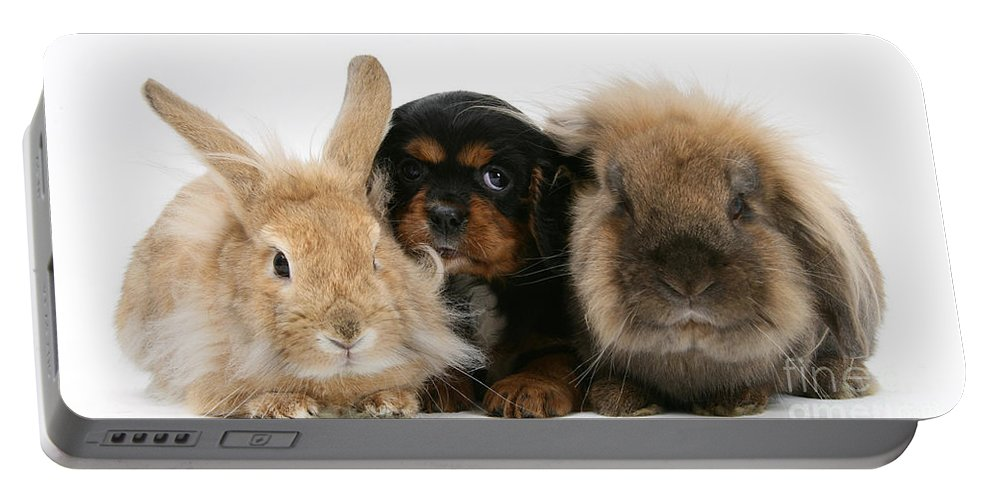Nature Portable Battery Charger featuring the photograph Cavalier King Charles Spaniel by Mark Taylor