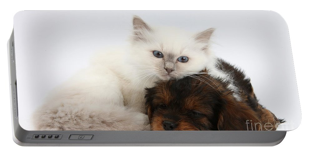 Animal Portable Battery Charger featuring the photograph Cavapoo Pup And Blue-point Kitten by Mark Taylor
